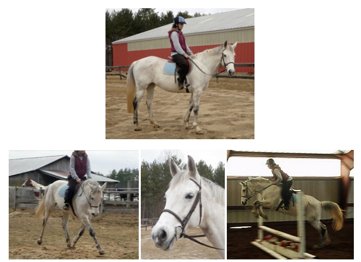 High Standard Stable in Wells, Maine: Horses For Sale